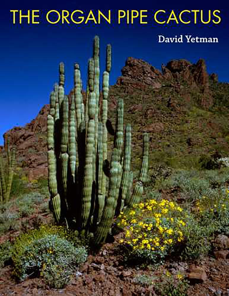 Organ pipe cactus in Arizona desert
